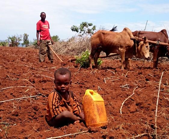 Ploughing in Mante Garira, Sodo, Wolayta